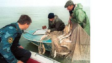 Рыбное браконьерство в России и его жертвы picture