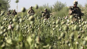 Маковое поле в Афганистане