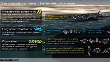 Опасности нефтяного загрязнения для обитателей моря