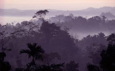 В 1975 году WWF начал первую международную кампанию по спасению тропических лесов