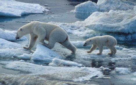 В 2009 году WWF потребовал от США введения моратория на добычу белых медведей чукотско-аляскинской популяции