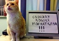 Свободу кошке Мохнаткина!
