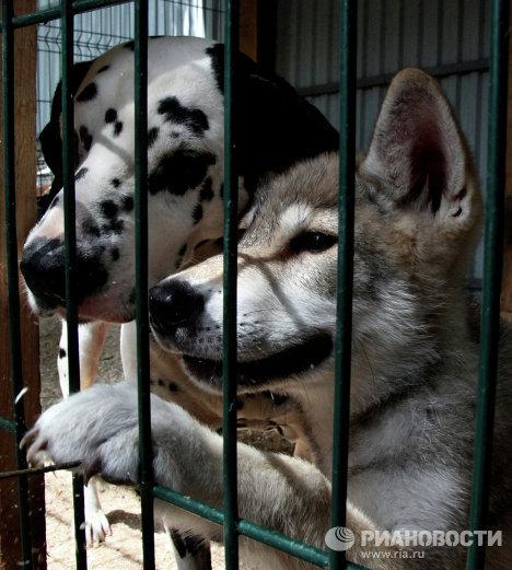 Собака с волчонком в зоопарке Владивостока
