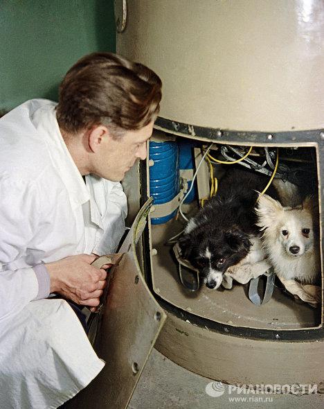 """Собаки """"Дамка"""" и """"Козявка"""" перед полётом в космос"""