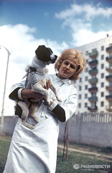 Собака-космонавт Ветерок