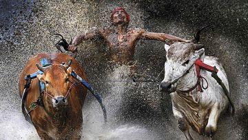 Снимок, победивший в World Press Photo-2013