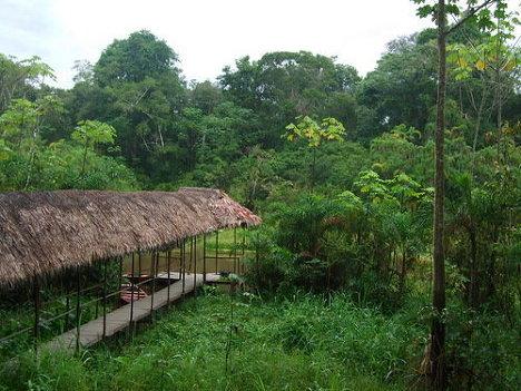 Недавно открытое амазонское племя заразилось гриппом