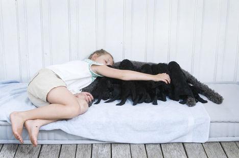 Принцесса Ингрид Александра с собакой Милли Какао и щенками