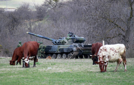 Коровы пасутся неподалеку от танка