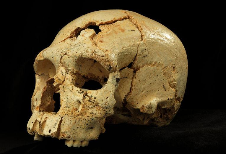 Череп, найденный в Расщелине Костей в Атапуэрке