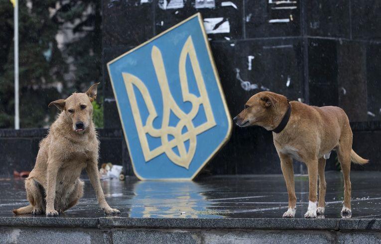 Собаки у поваленного герба Украины в Славянске