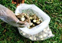 Корни растения кассава (маниок)