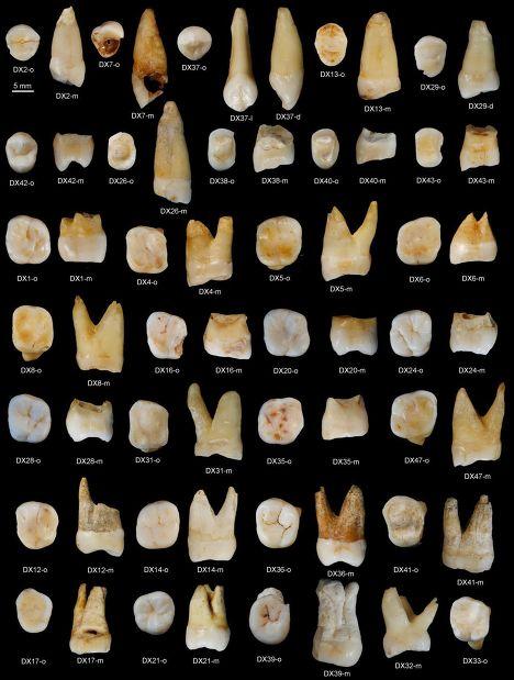 Зубы, найденные в пещере Фуянь в китайской провинции Хунань