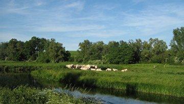 Река Толлензе возле деревни Буров в округе «Мекленбург Озерный край»