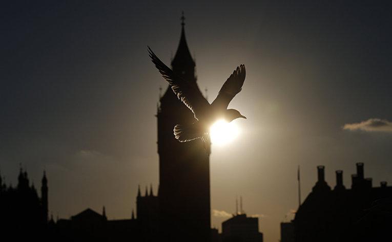 Чайка пролетает мимо башни Биг-Бен в Лондоне