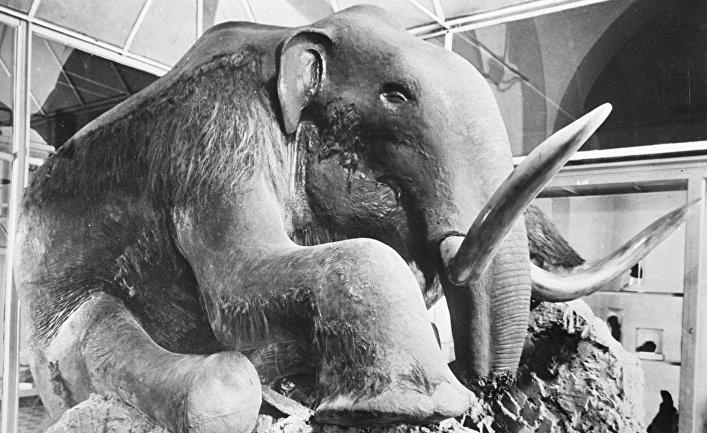 Чучело березовского мамонта