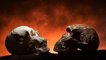 Слева – череп человека, справа – неандертальца