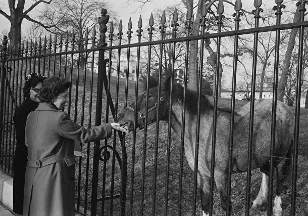 Лошадь Кэролайн Кеннеди по имени Макароны