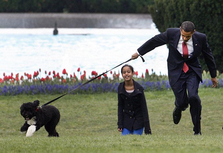 Президент Барак Обама решил покрасоваться своей новой собакой по имени Бо