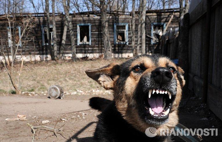 Полесский радиационно-экологический заповедник в Белоруссии