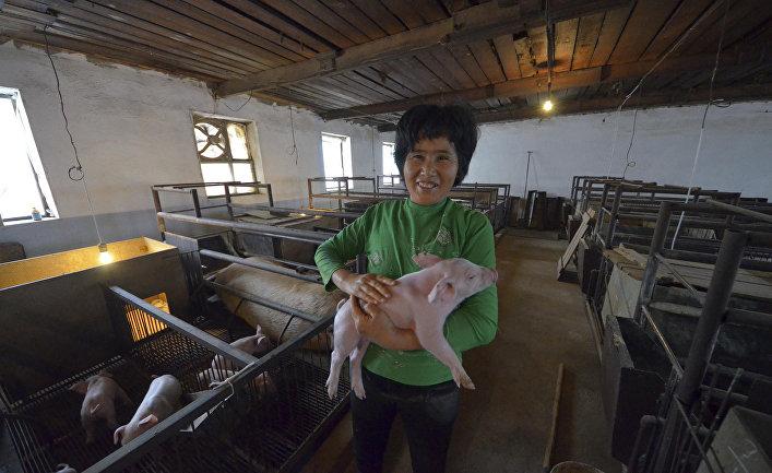 Ферма «Армада» китайской компании Dongning Huaxin Group в Уссурийске