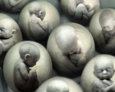 эмбрионы