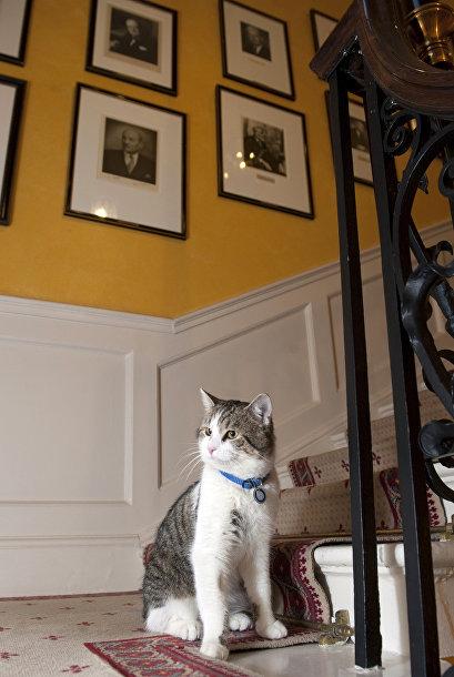 Кот с Даунинг-стрит