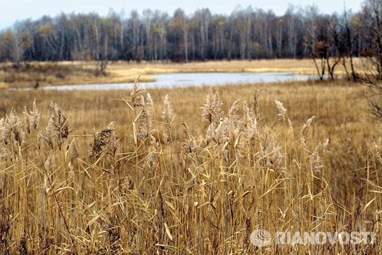 Дальневосточный пейзаж