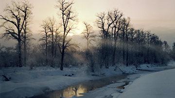Зимний лес на Камчатке