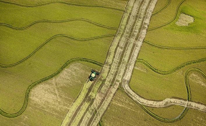 Уборка урожая риса на полях в США