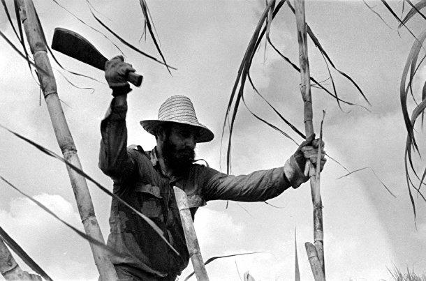 Фидель Кастро рубит сахарный тростник
