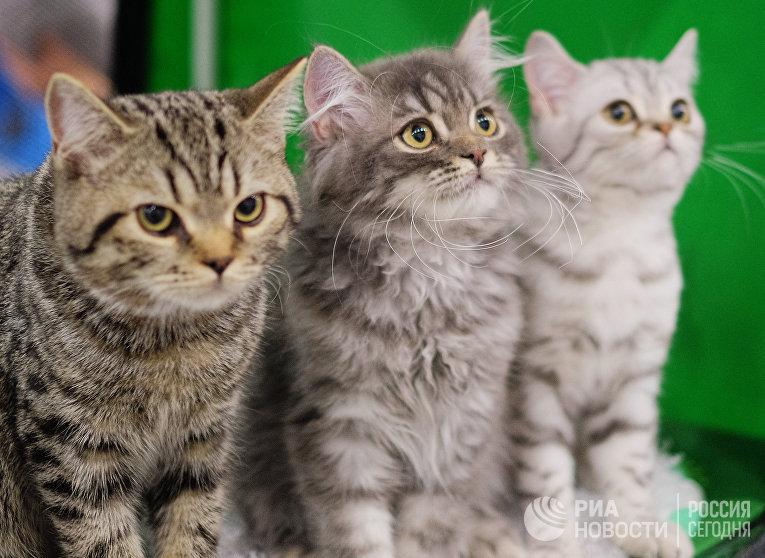 """Выставка кошек """"Гран-при Royal Canin"""" в Москве"""