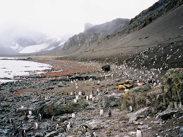 Мыс Ханна, место на острове Ливингстон вблизи Антарктиды, популярное среди туристов