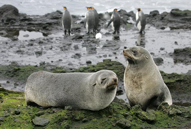 Морские львы на острове в архипелаге Крозе в южных морях Антарктики
