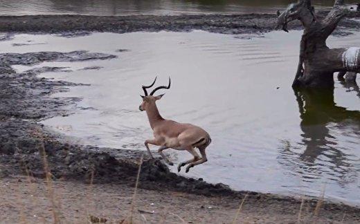 Драма на болоте