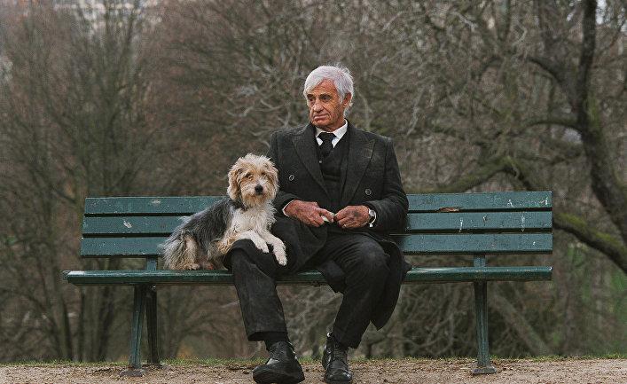 Собака — друг человека   Общество   ИноСМИ - Все, что ...