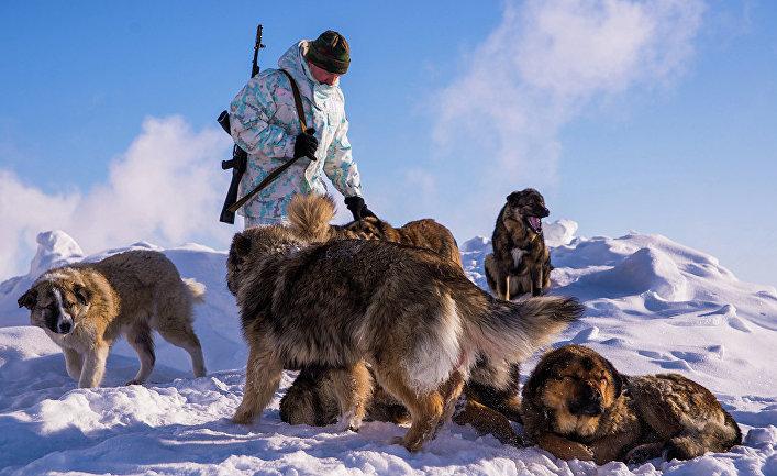 """Пограничник с собаками на пограничной заставе """"Нагурское"""", Земля Франца-Иосифа"""
