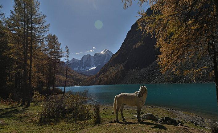 Лошадь пасется на берегу Нижнего Шавлинского озера в Кош-Агачском районе Республики Алтай