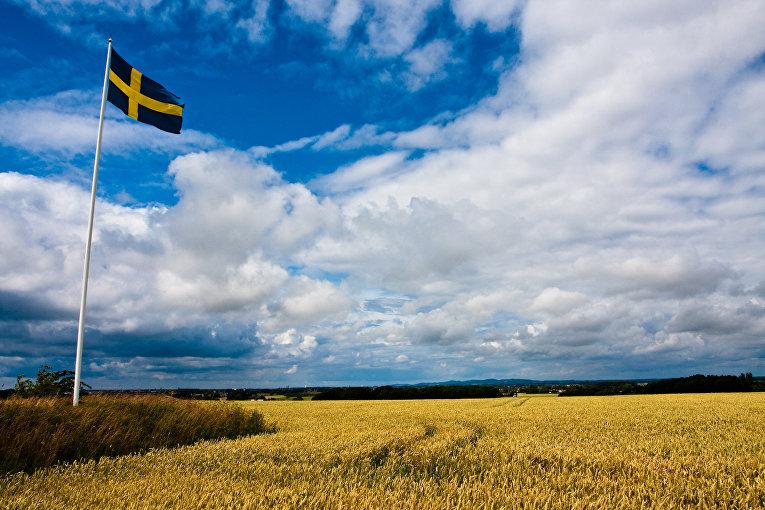 Флаг Швеции в поле