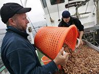 Промысел креветок на борту рыбацкого корабля