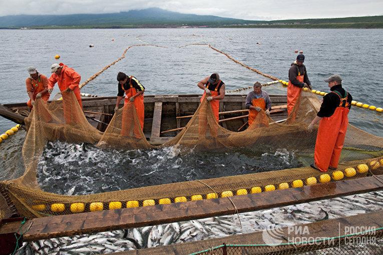 Рыбаки перебирают ставной невод у острова Итуруп России. Курильские острова. Остров Итуруп