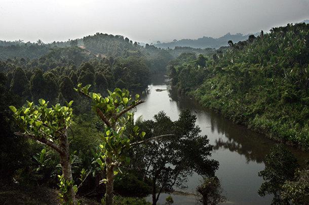 Леса Мадагаскара