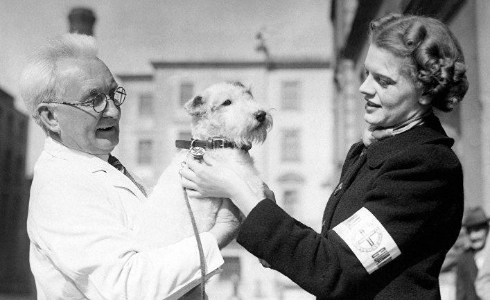 Служба помощи домашним животным в Лондоне