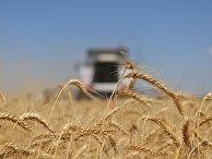 Уборка зерновых в Ставропольском крае