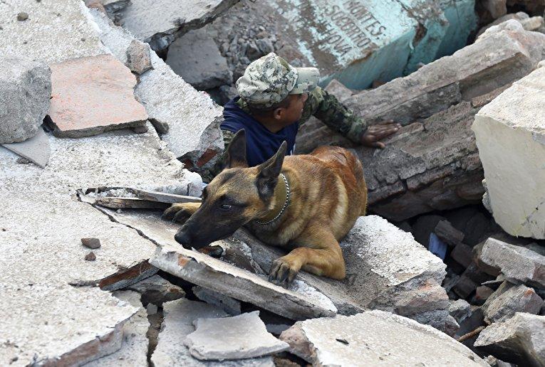 Солдаты со специально обученными собаками ищут выживших среди руин зданий
