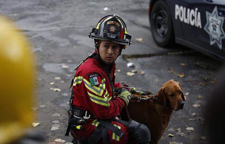 Собака-спасатель и ее вожатый готовятся к работе на месте разрушенного землетрясением семиэтажного здания