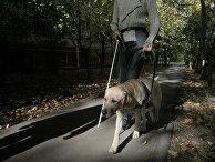 Собака-поводырь проходит обучение с инструктором в условиях города