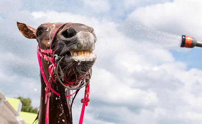 Лошадь во время приема освежающего душа в Гамбурге, Германия