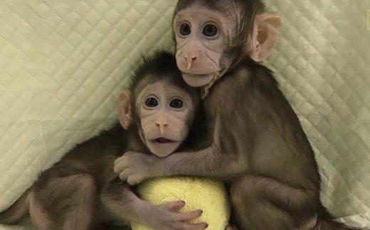 Можно ли клонировать человека?