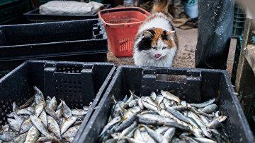 Кот у корзин с рыбой во время прибрежного лова черноморской рыбы в Севастополе